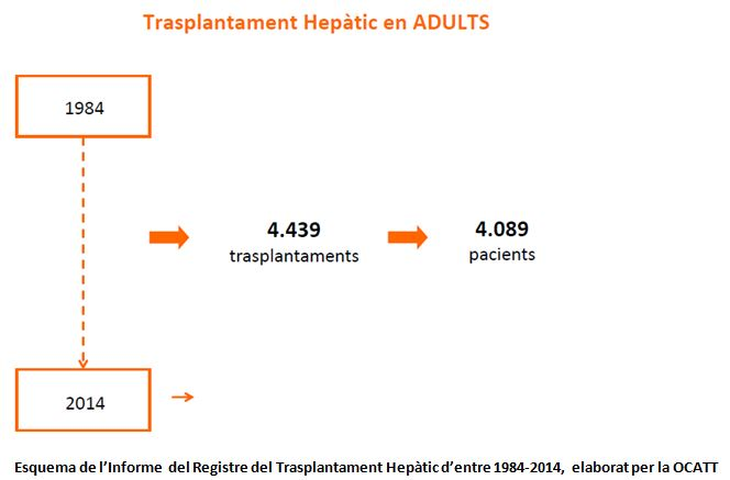 trasplantament_hepatic_en_adults